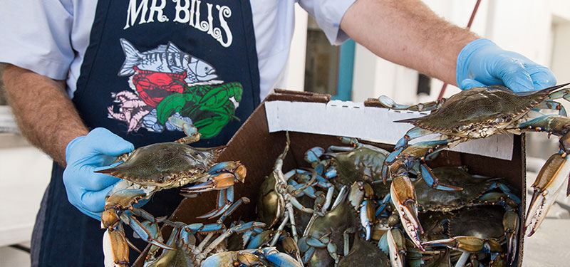 Owner holding case of maryland blue crabs